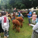 Ogród w Ognisku Grochów, dzieci karmiące alpaki
