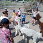 Zdjęcie grupowe, dzieci na wycieczce karmiące alpaki