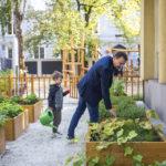 Ogród warzywny w Ognisku Grochów